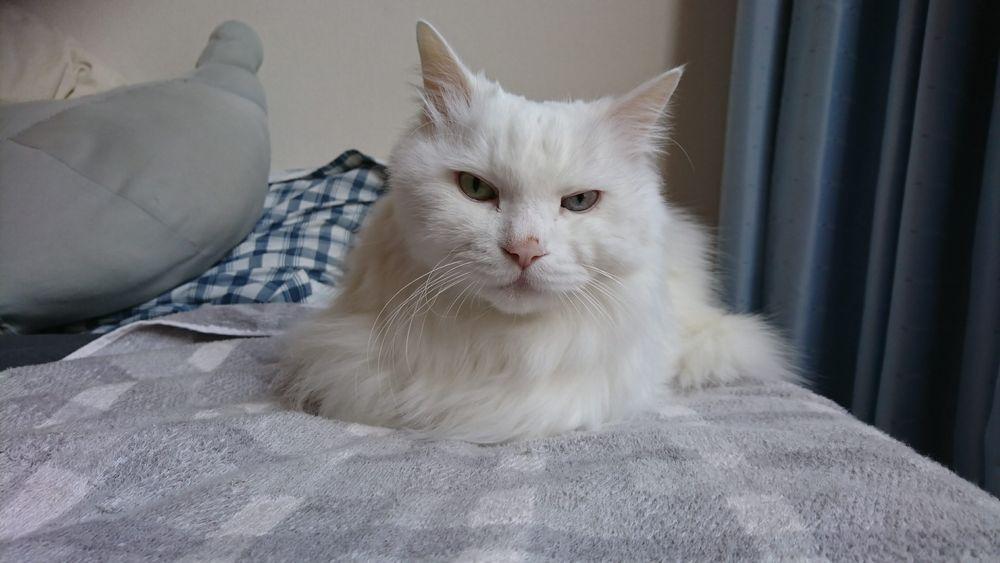 猫エッセイ