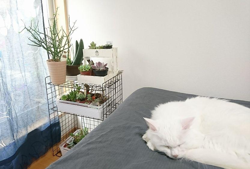 多肉植物と猫