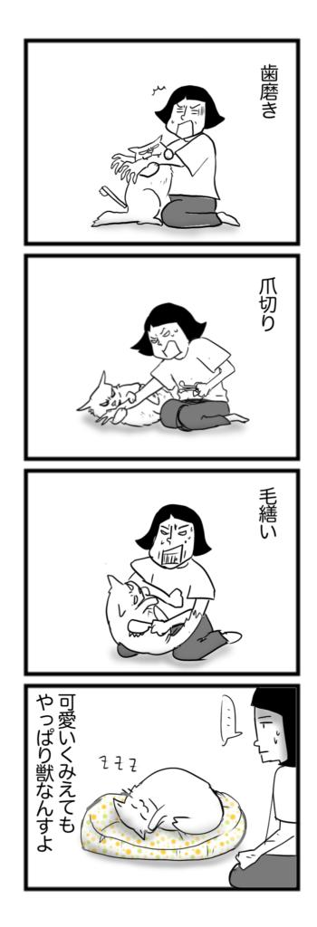 猫4コマ漫画「結局猫は」