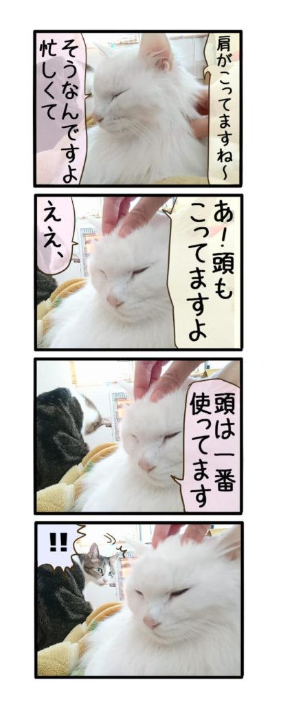 猫四コマ漫画